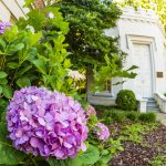 A hydrangea bloom with the Round House in the background.