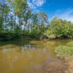 A muddy creek under a blue sky with tall trees on its banks.