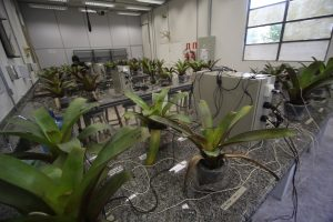 Plants sit on tables in a lab.