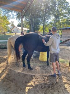 UA students brush horses.