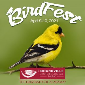 The Birdfest poster showing a yellow bird on a branch.