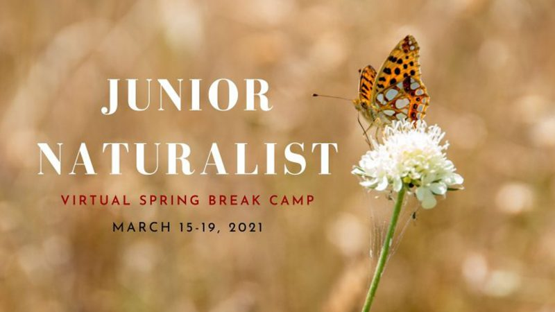The Junior Naturalist Camp poster showing a butterfly on a flower.