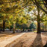 Trees on The University of Alabama Quad