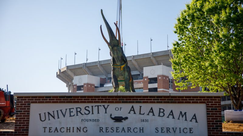 The Tuska statue being placed on its pedestal outside Bryant-Denny Stadium