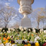 Colorful tulips are shown in front of a statue of a chalice.