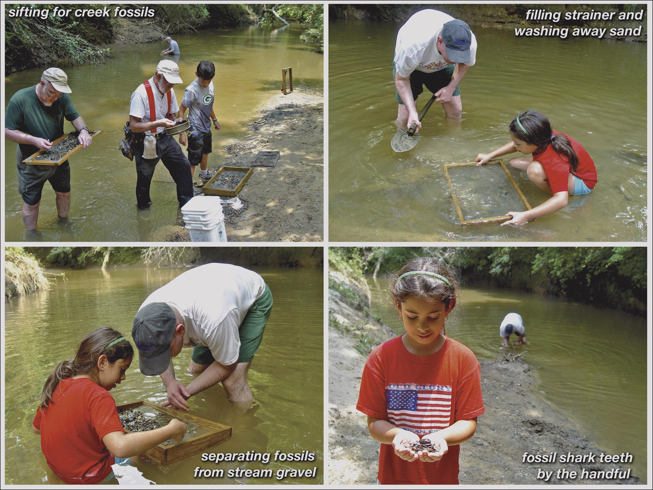 Shark Tooth Creek fossil hunt.